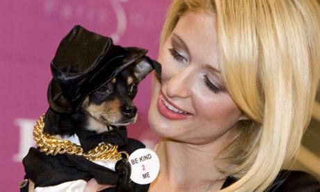 Paris Hilton, Chihuahua