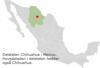 Chihuahua oprindelse